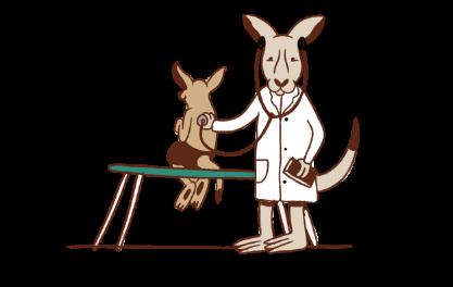 attività pediatriche la volpe e il canguro