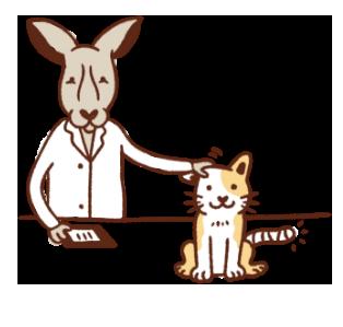 canguro che si prende cura di un gatto